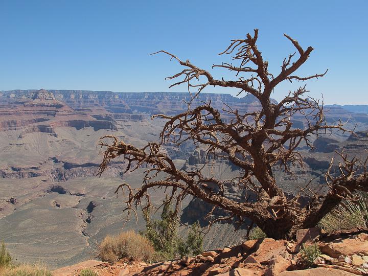 grand canyon-25