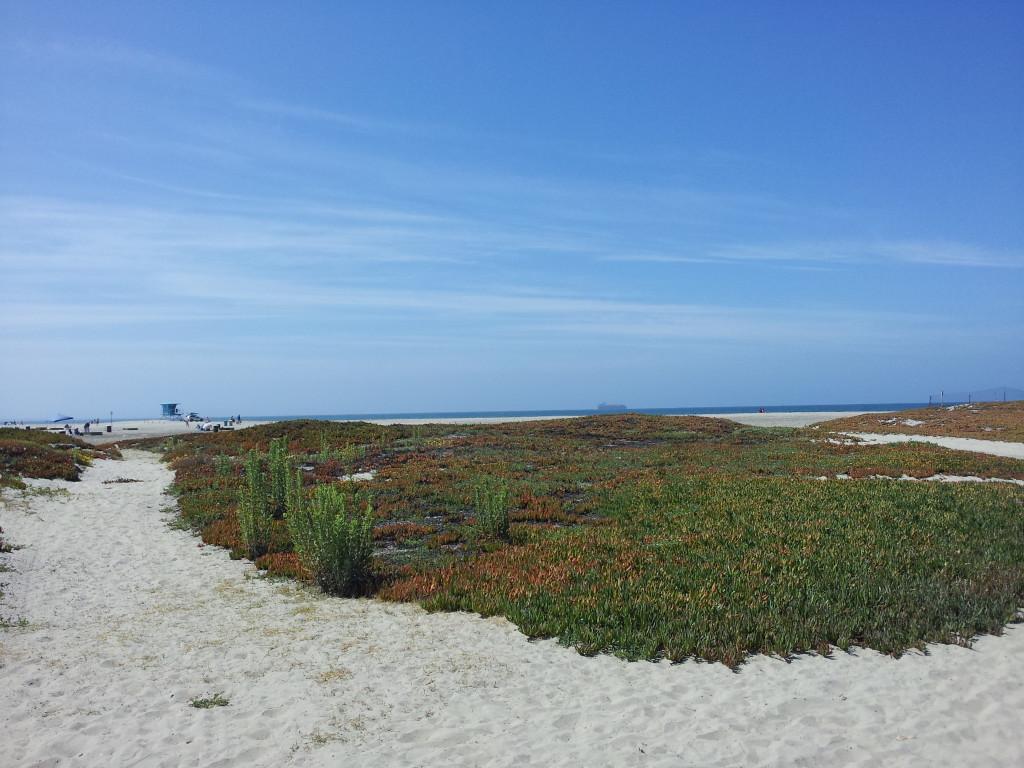 Coranado beach (4)