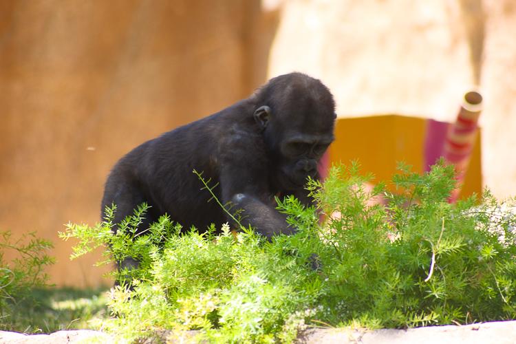 Safari Park (16)