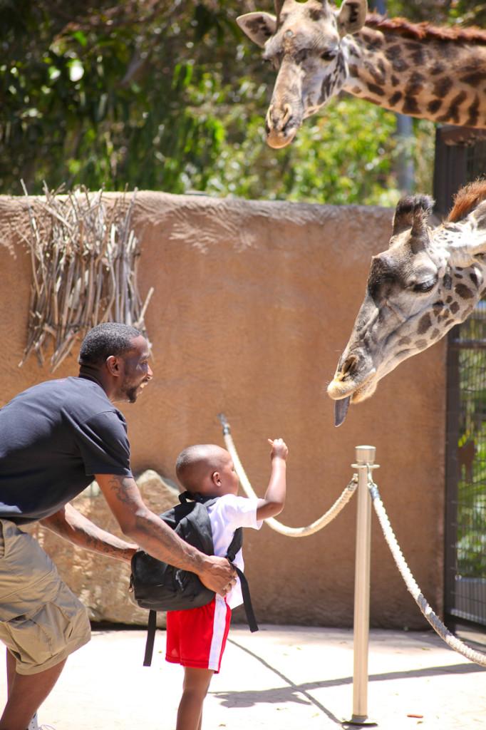 San Diego Zoo (8)