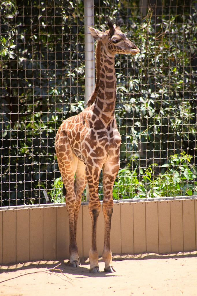 San Diego Zoo (9)